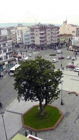 1933 Yılında Kordon Boyuna Dikilen Tarihi Monolya Ağacı