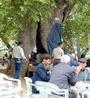 Bin 600 Yıllık Çınar Ağacının Gövdesinde Çay Ocağı