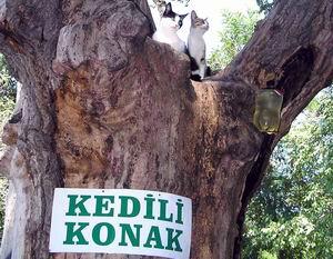 Kedili Konak Tarihe Karıştı