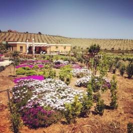 Bozcaada'daki Bağ Evleri
