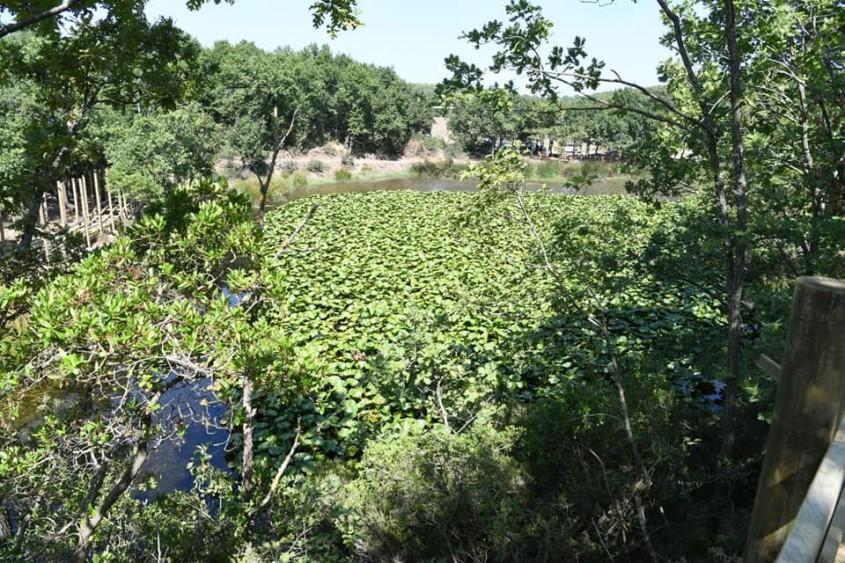 Nilüfer Gölü Çevresinde Düzenleme Çalışmaları Sürüyor