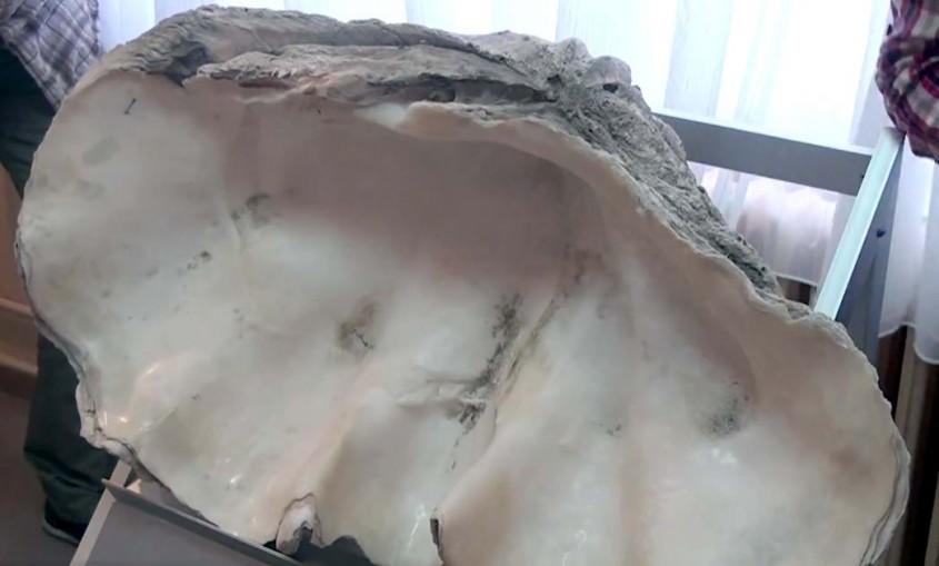 İşte 1 Milyon Yaşındaki İstiridye Fosili!