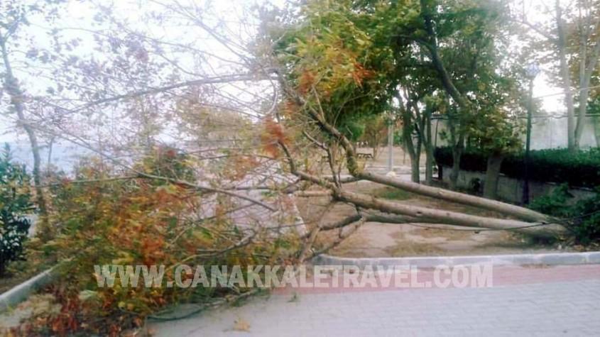 Çanakkale'de Ağaçlar Kökünden Söküldü
